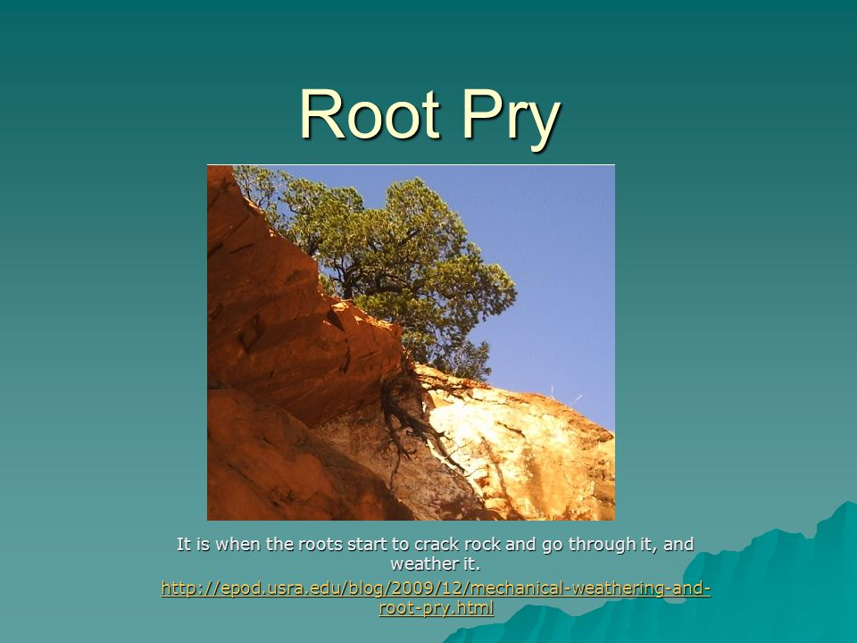 Root Pry It is when the roots start to crack rock and go through it, and weather it. http://epod.usra.edu/blog/2009/12/mechanical-weathering-and- root