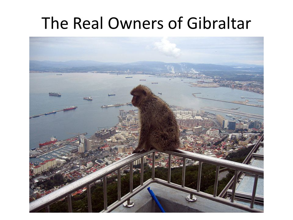 The Real Owners of Gibraltar