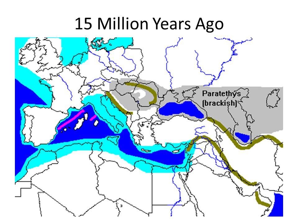 15 Million Years Ago