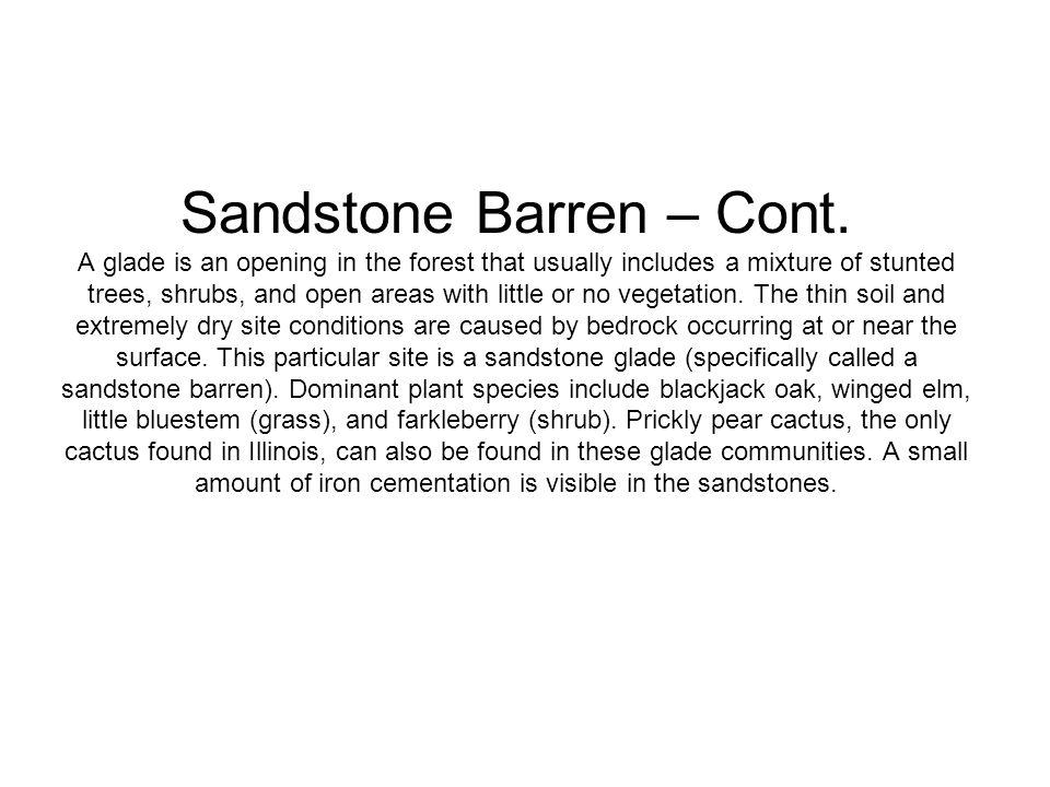Sandstone Barren – Cont.