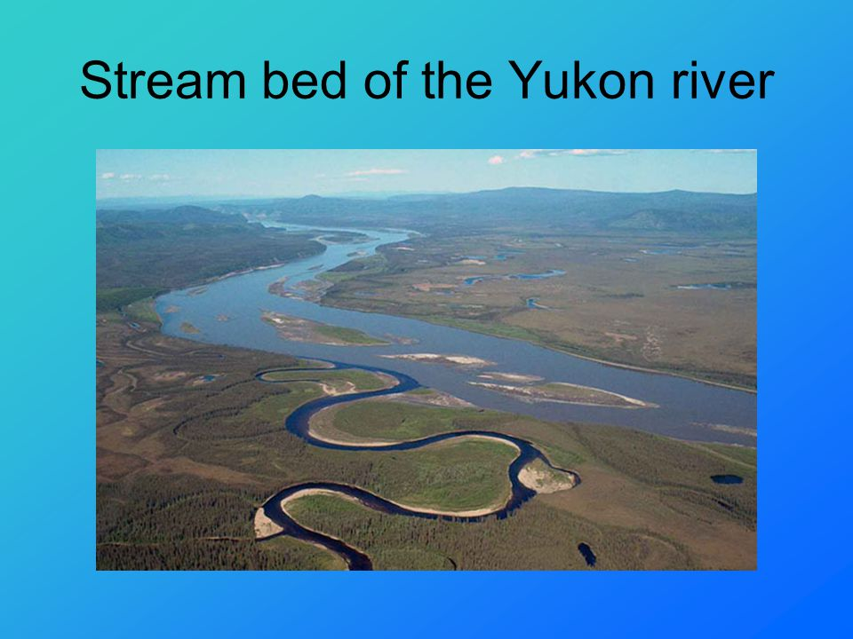 Stream bed of the Yukon river