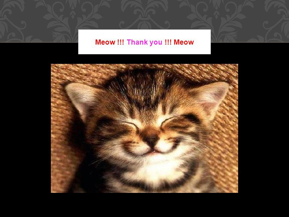 Meow !!! Thank you !!! Meow
