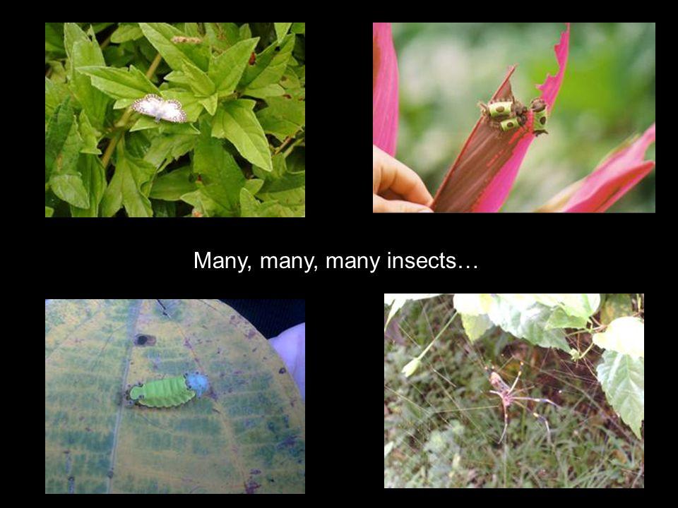 Many, many, many insects…