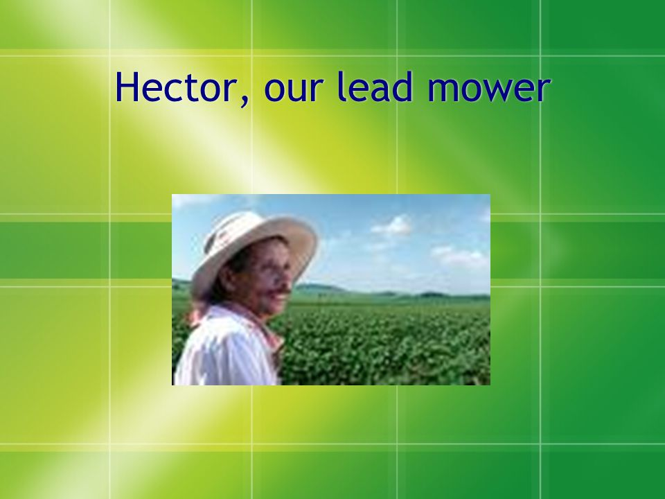 Hector, our lead mower