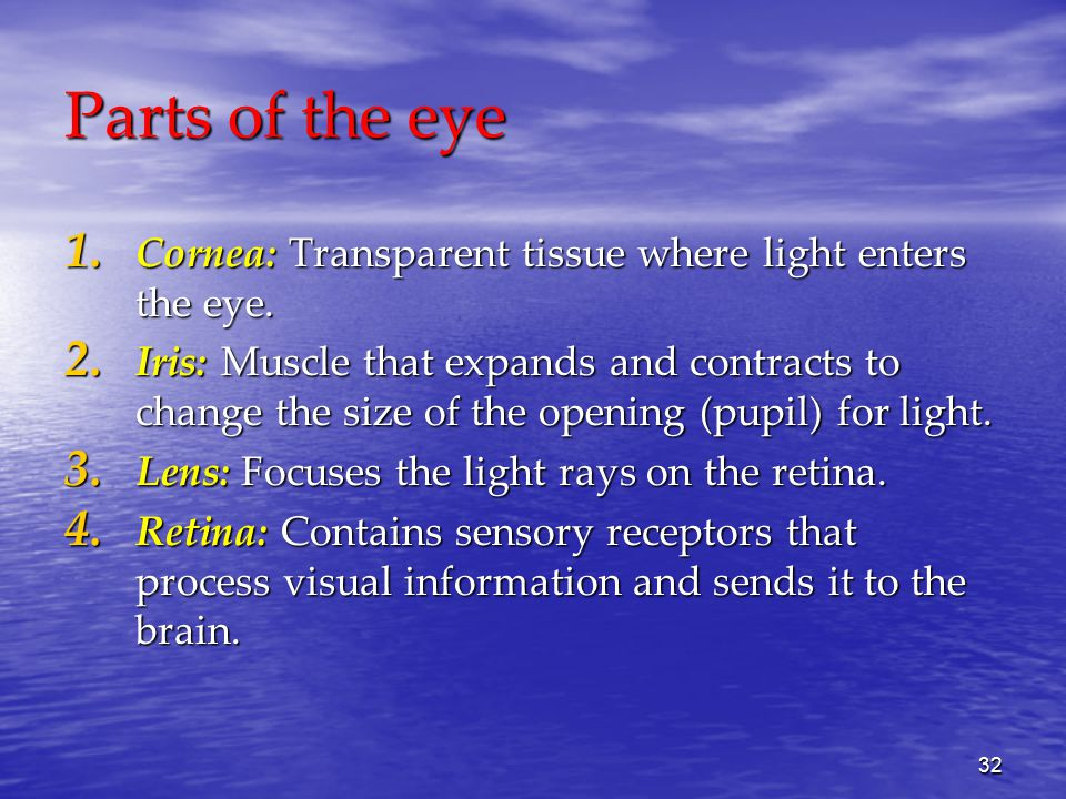 32 Parts of the eye 1. Cornea: Transparent tissue where light enters the eye.