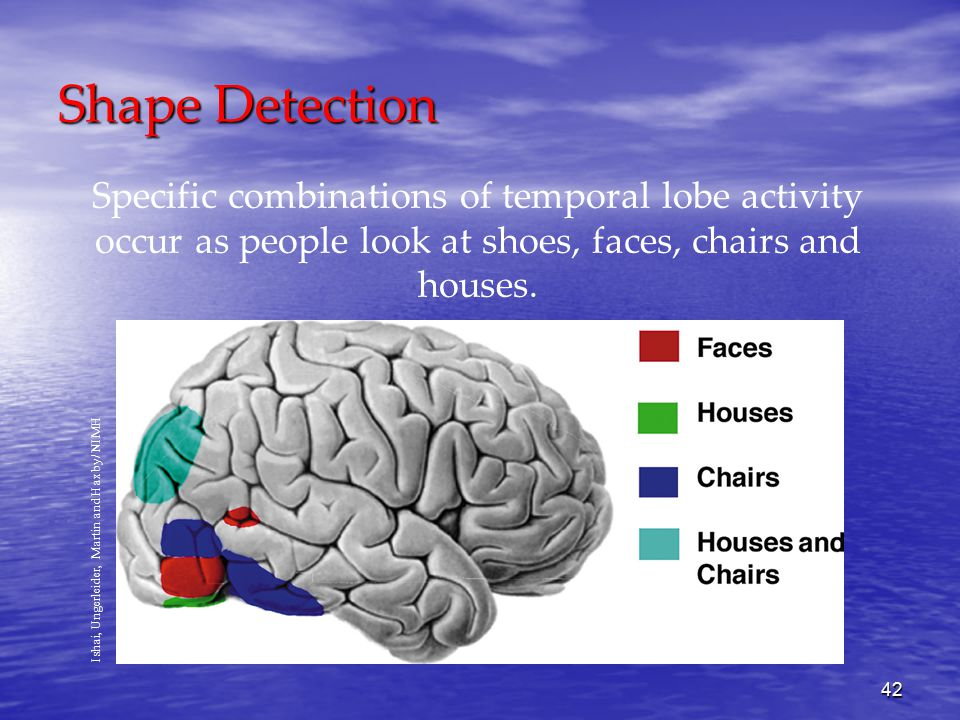 42 Shape Detection Specific combinations of temporal lobe activity occur as people look at shoes, faces, chairs and houses.