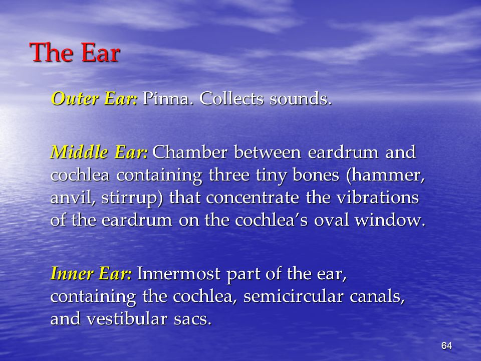 64 The Ear Outer Ear: Pinna. Collects sounds.