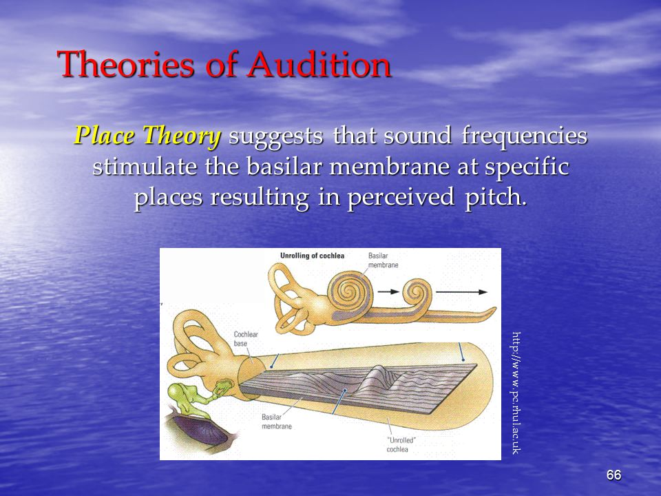 66 Theories of Audition Place Theory suggests that sound frequencies stimulate the basilar membrane at specific places resulting in perceived pitch.
