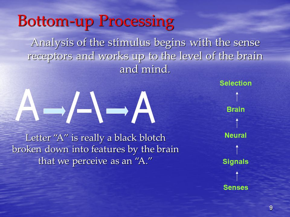 9 Bottom-up Processing Analysis of the stimulus begins with the sense receptors and works up to the level of the brain and mind.