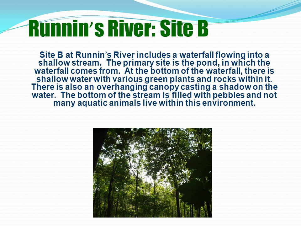 Runnin ' s River: Site B Site B at Runnin ' s River includes a waterfall flowing into a shallow stream.