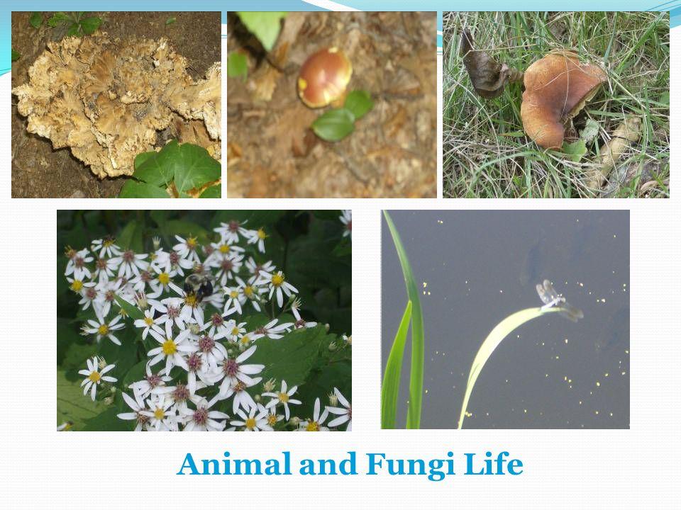 Animal and Fungi Life