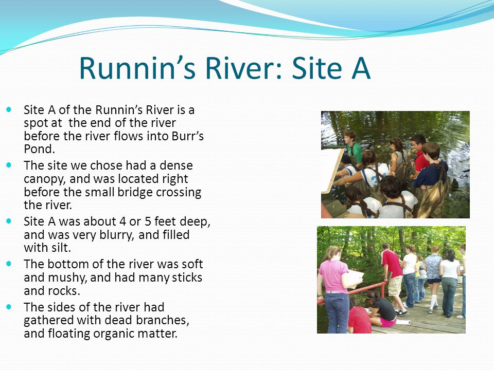 Runnin's River: Site A Site A of the Runnin's River is a spot at the end of the river before the river flows into Burr's Pond.