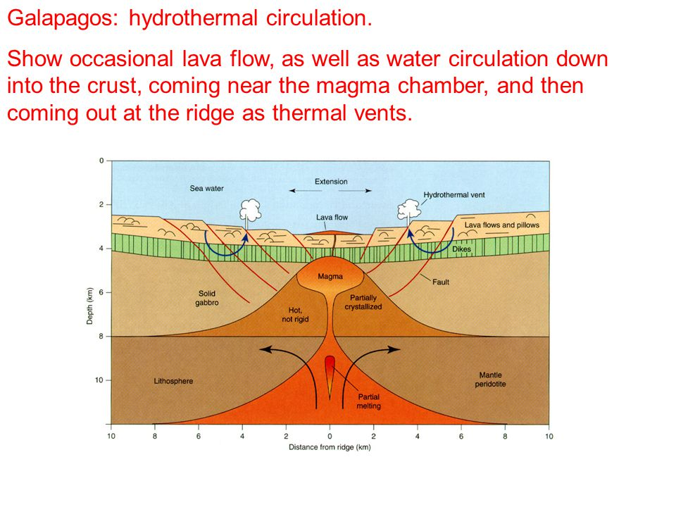 Galapagos: hydrothermal circulation.
