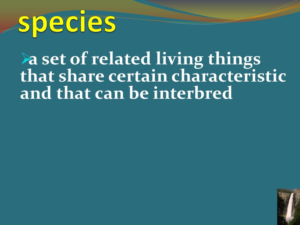  a set of related living things that share certain characteristic and that can be interbred