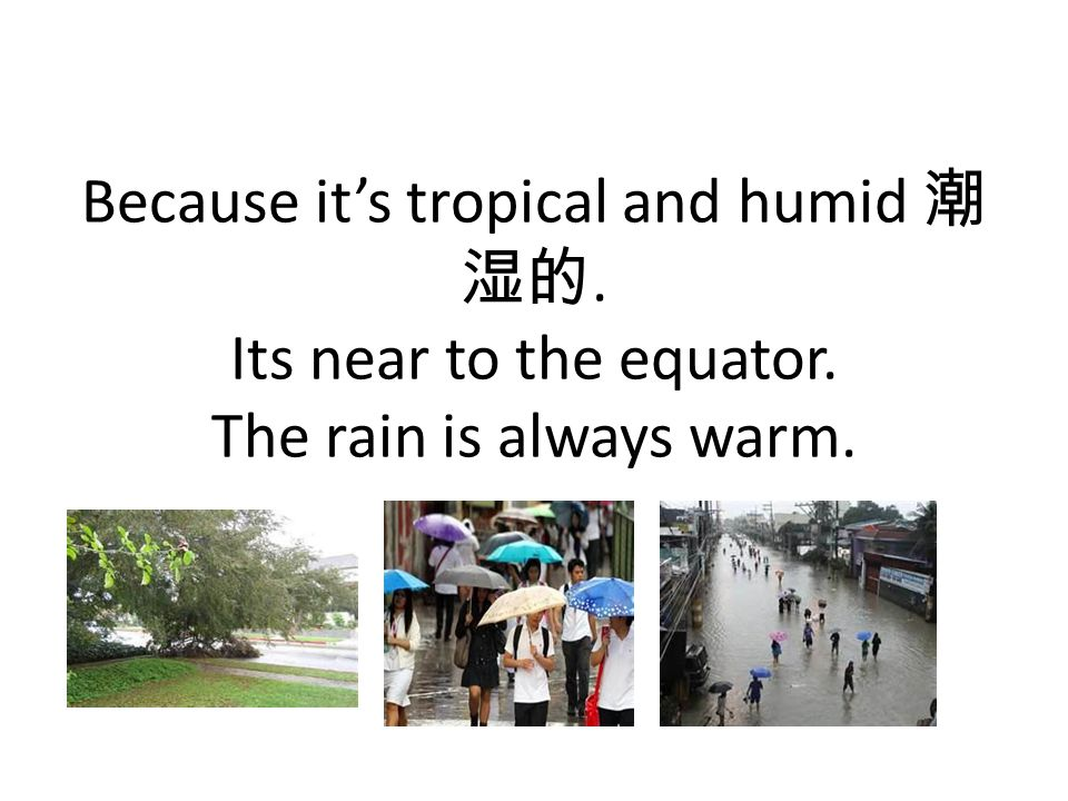 Because it's tropical and humid 潮 湿的. Its near to the equator. The rain is always warm.