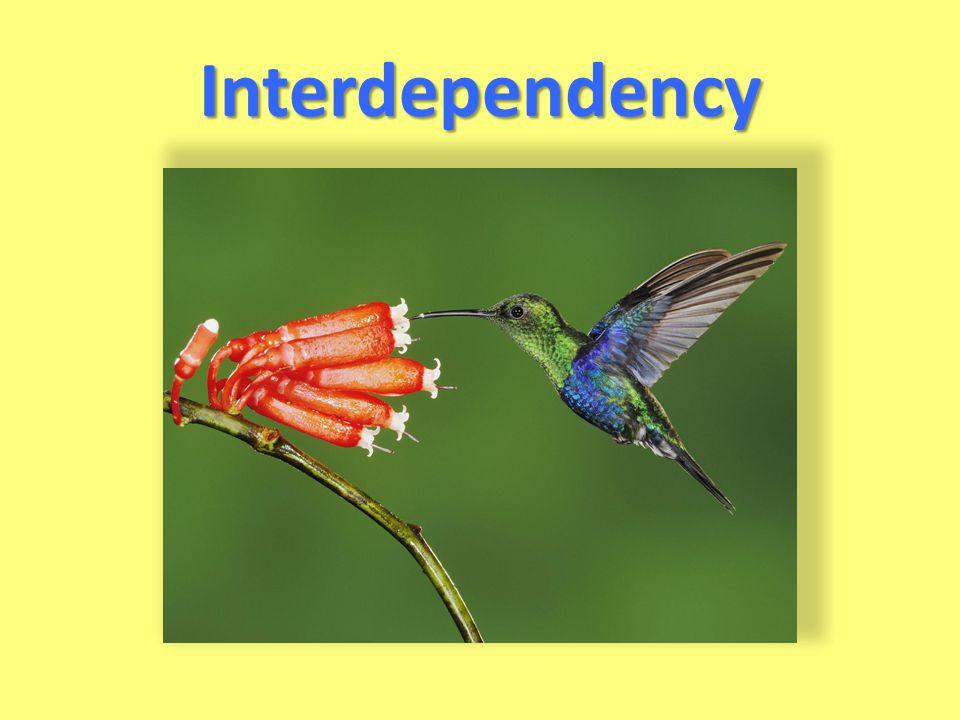 Interdependency