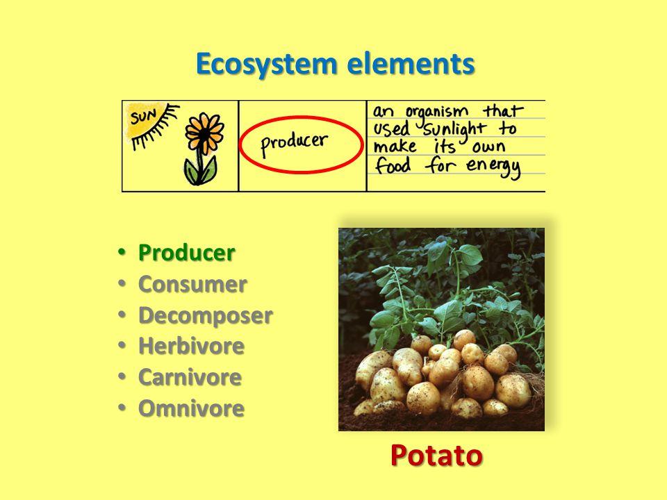 Ecosystem elements Producer Producer Consumer Consumer Decomposer Decomposer Herbivore Herbivore Carnivore Carnivore Omnivore Omnivore Potato