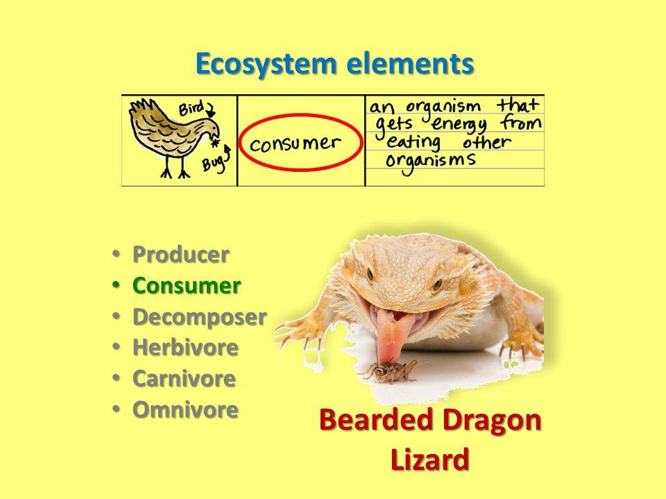 Ecosystem elements Producer Producer Consumer Consumer Decomposer Decomposer Herbivore Herbivore Carnivore Carnivore Omnivore Omnivore Bearded Dragon