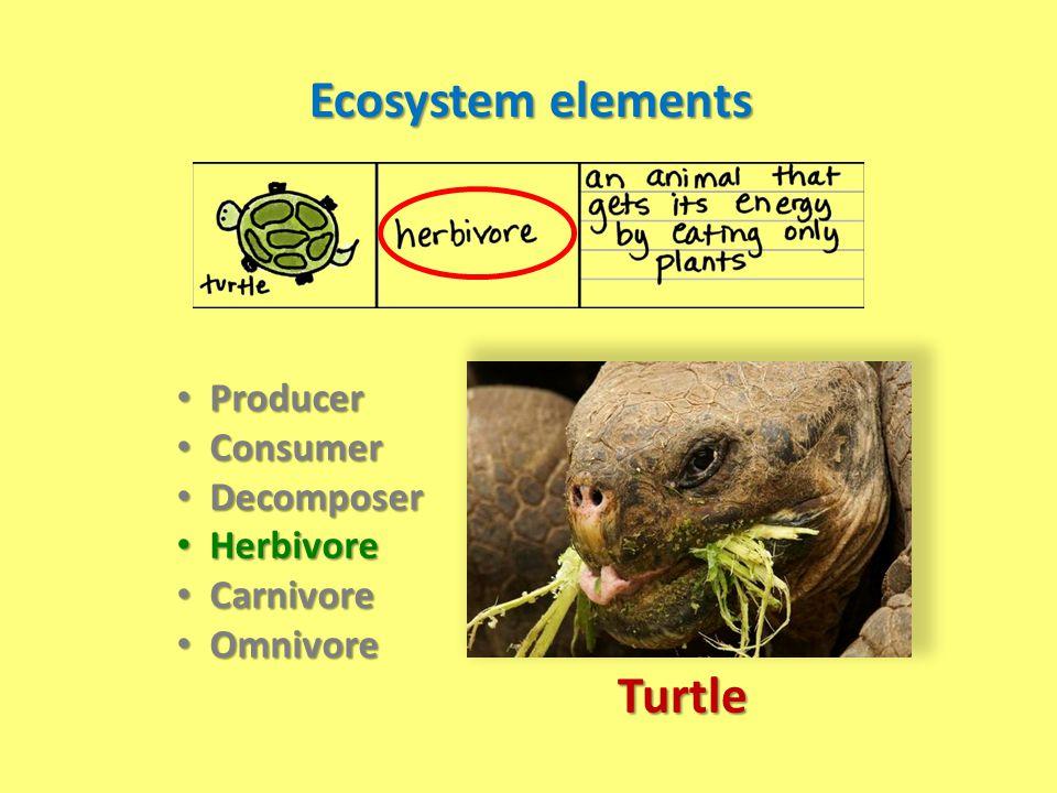 Ecosystem elements Producer Producer Consumer Consumer Decomposer Decomposer Herbivore Herbivore Carnivore Carnivore Omnivore Omnivore Turtle