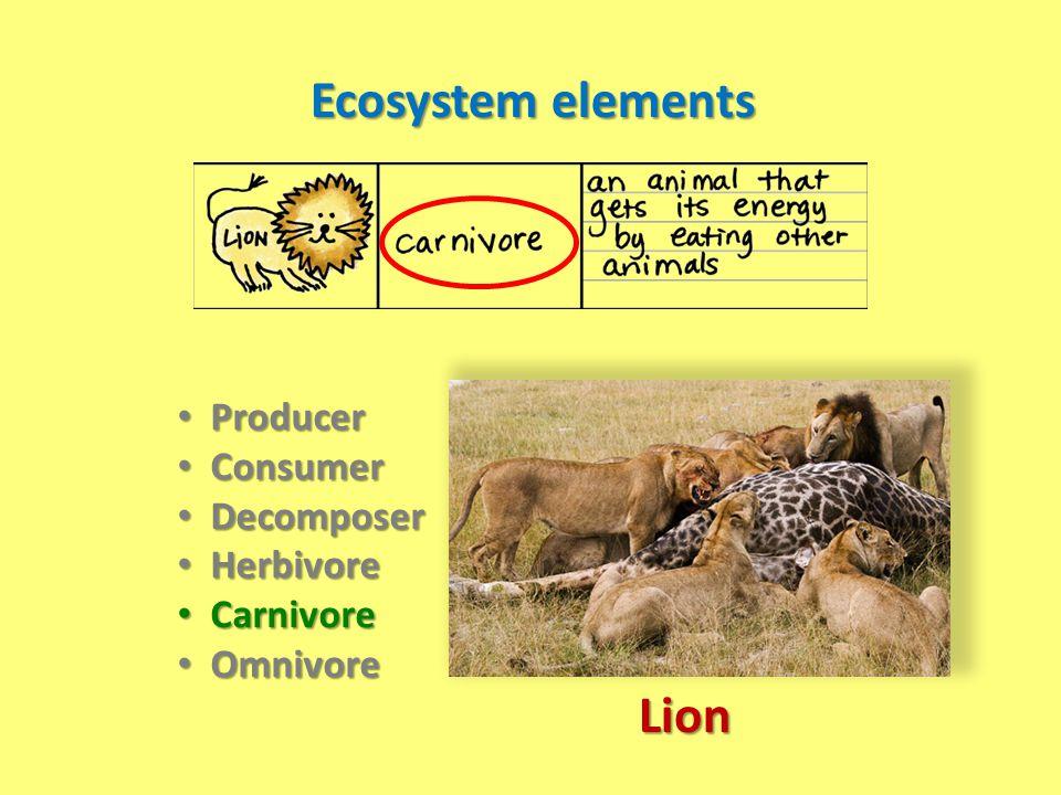 Ecosystem elements Producer Producer Consumer Consumer Decomposer Decomposer Herbivore Herbivore Carnivore Carnivore Omnivore Omnivore Lion