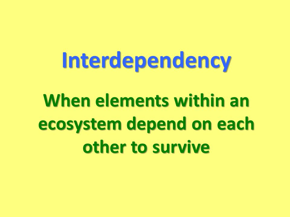 When elements within an ecosystem depend on each other to survive Interdependency