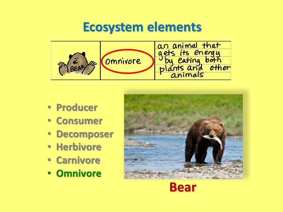 Ecosystem elements Producer Producer Consumer Consumer Decomposer Decomposer Herbivore Herbivore Carnivore Carnivore Omnivore Omnivore Bear