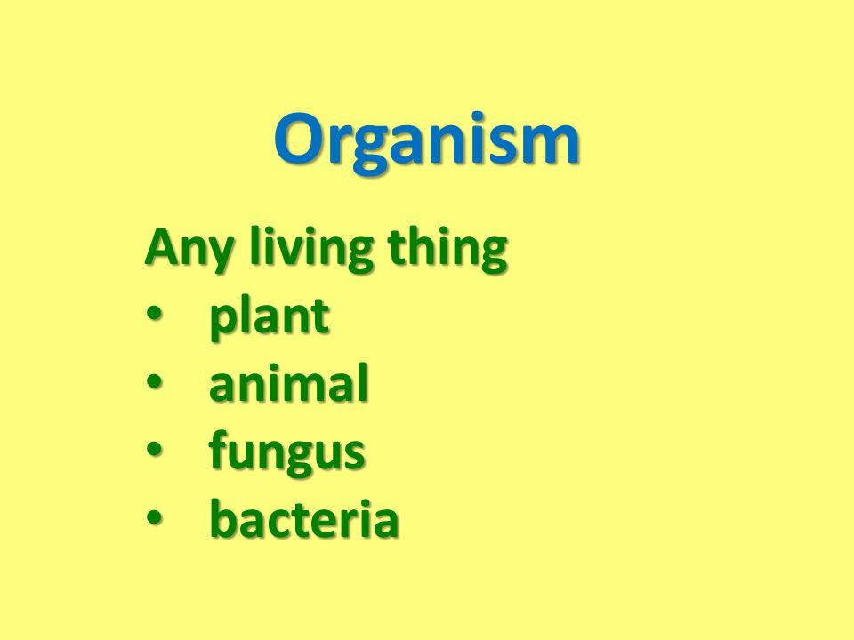 Organism Any living thing plant plant animal animal fungus fungus bacteria bacteria