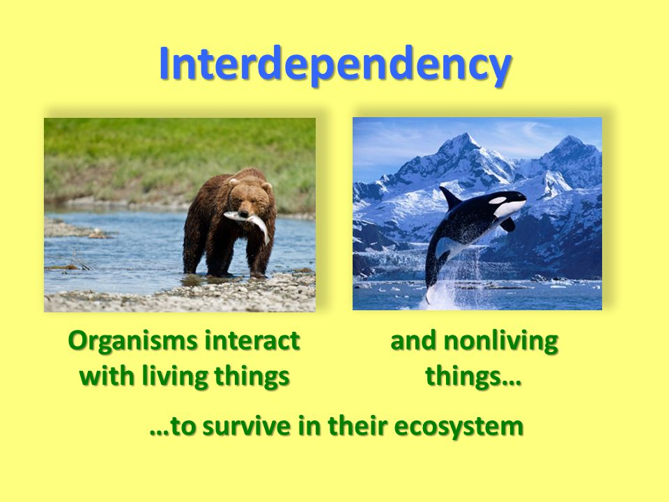 …to survive in their ecosystem Interdependency Organisms interact with living things and nonliving things…