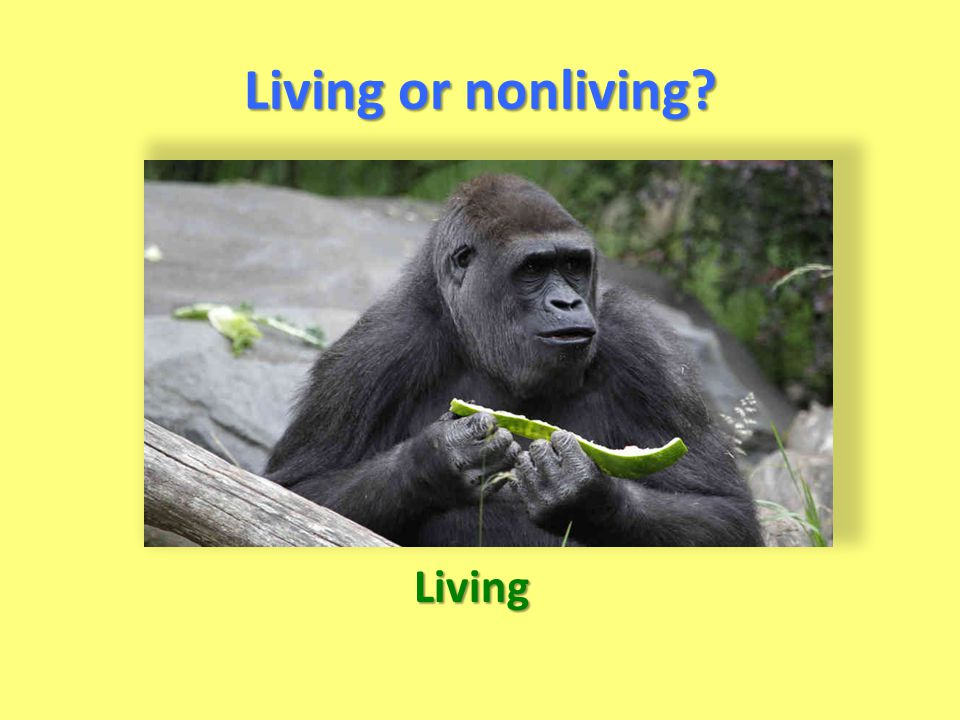 Living or nonliving? Living