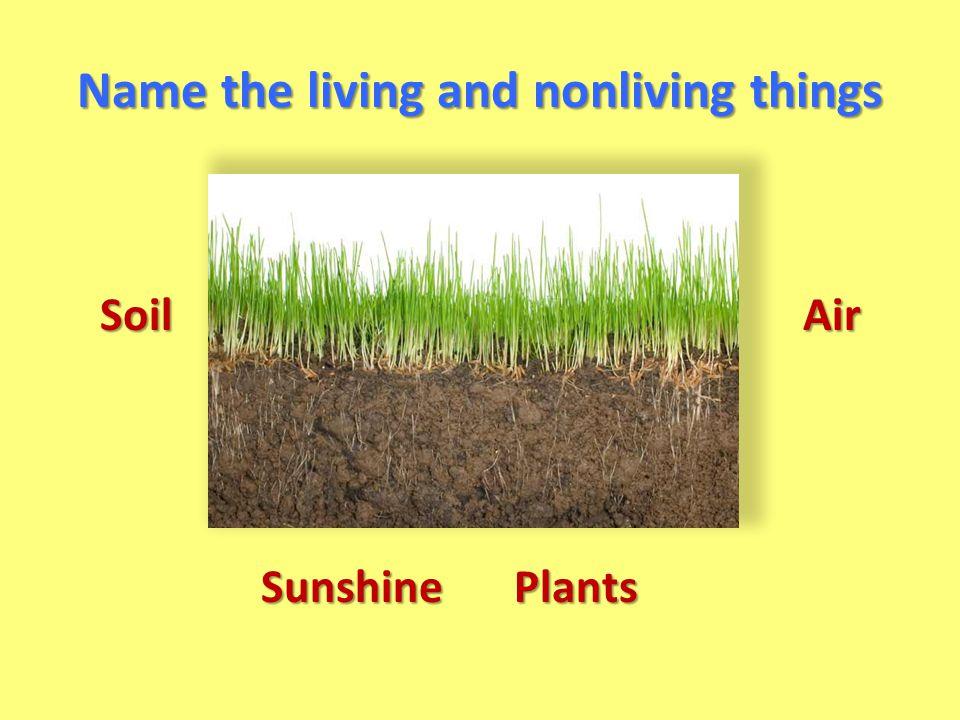 Soil Plants Air Sunshine
