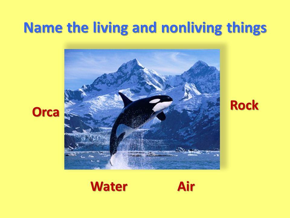 Orca WaterAir Rock