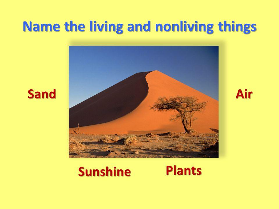 Sand Plants Air Sunshine