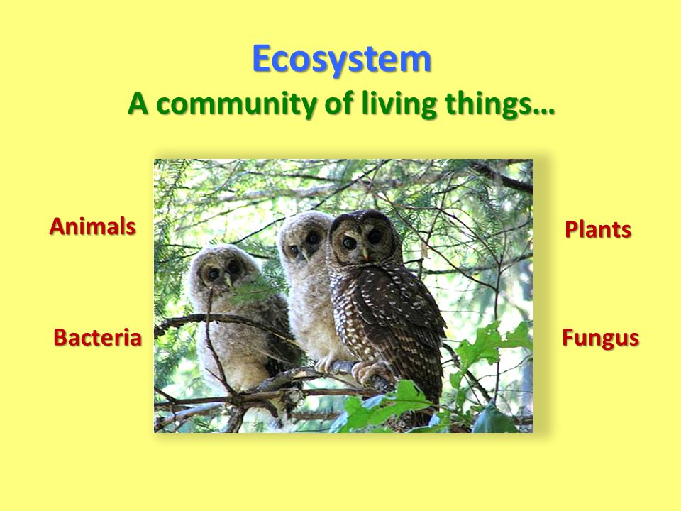 Ecosystem A community of living things… Plants Animals BacteriaFungus