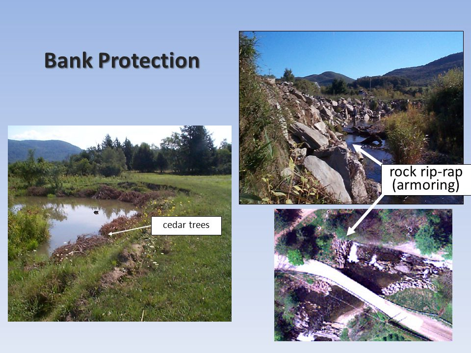 Bank Protection cedar trees rock rip-rap (armoring)