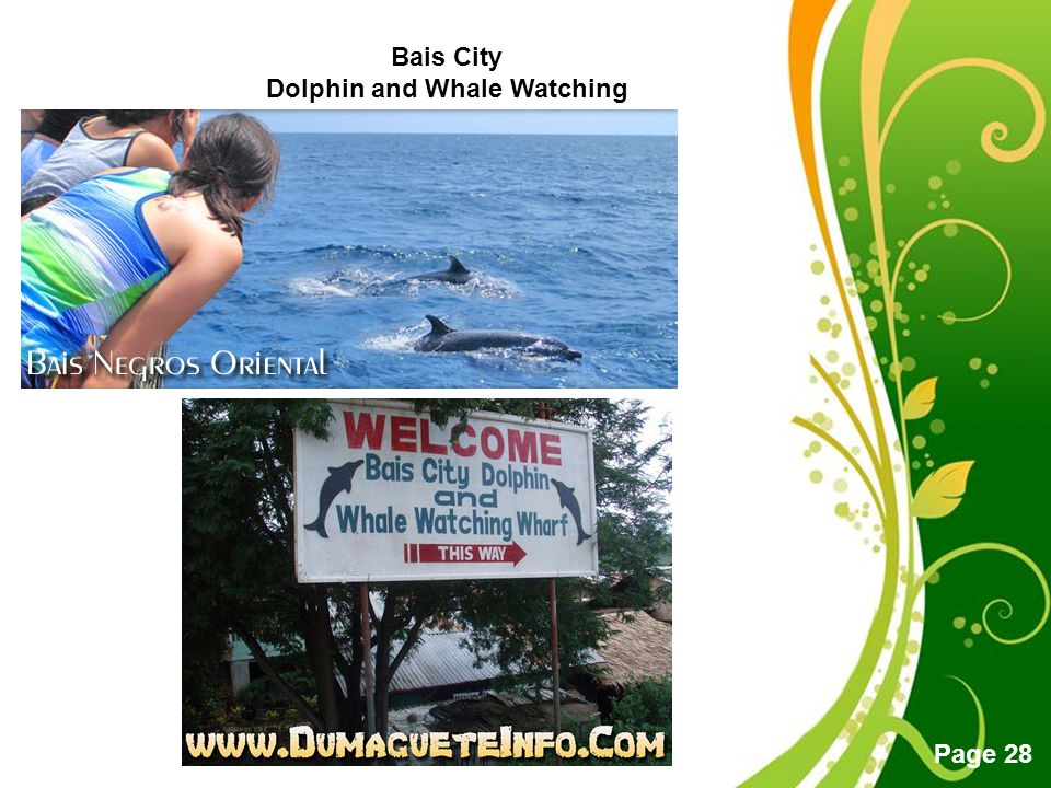 Free Powerpoint Templates Page 28 Bais City Dolphin and Whale Watching