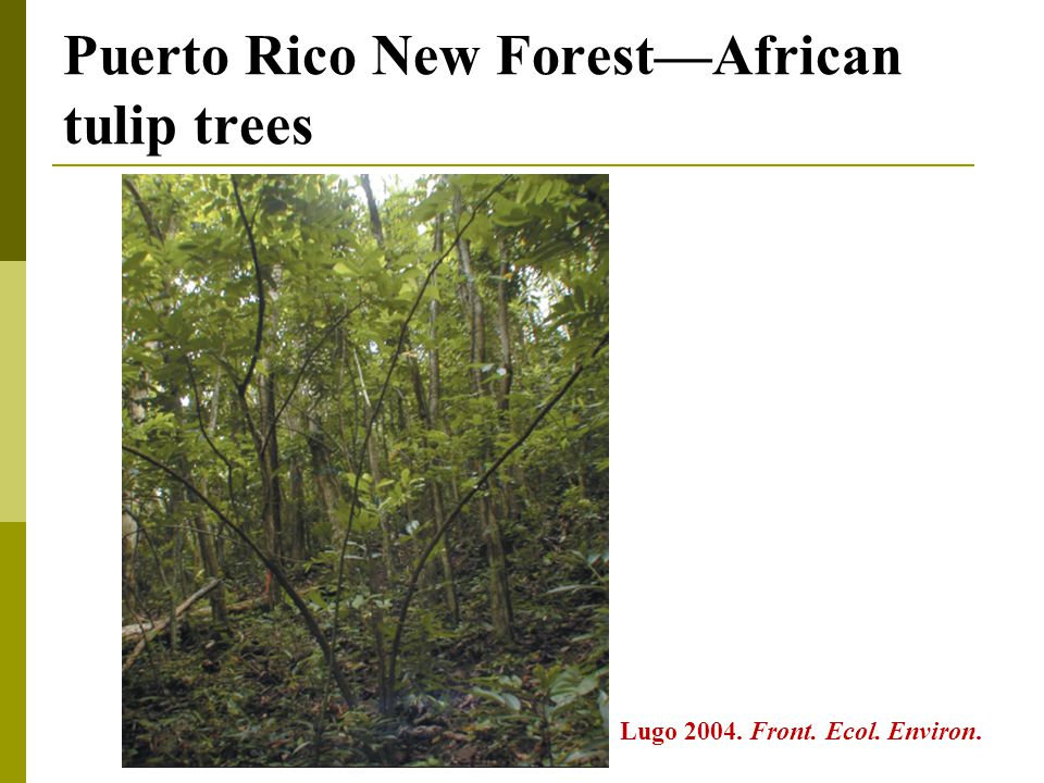 Puerto Rico New Forest—African tulip trees Lugo 2004. Front. Ecol. Environ.