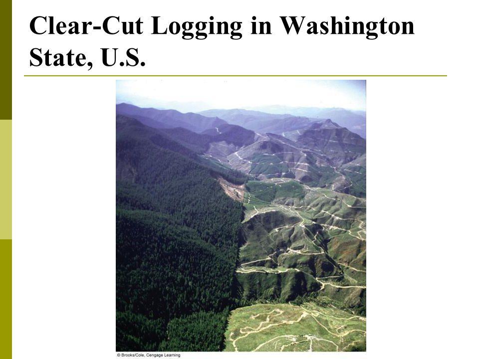 Clear-Cut Logging in Washington State, U.S.