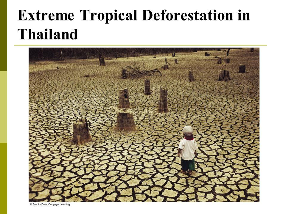 Extreme Tropical Deforestation in Thailand