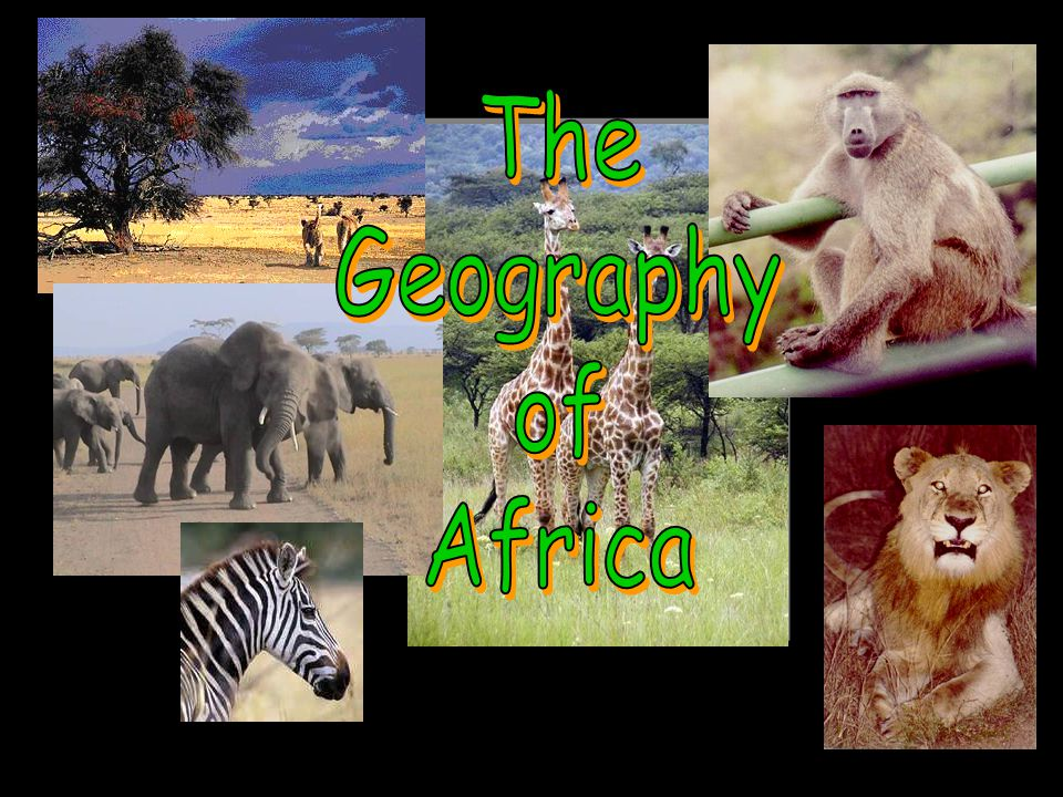 SAVANNAS Tropical grasslands with scattered trees and shrubs This is where many of the African Safaris take place Large populations of wildlife Serengeti – means endless plains –Largest mammal migration and game reserve