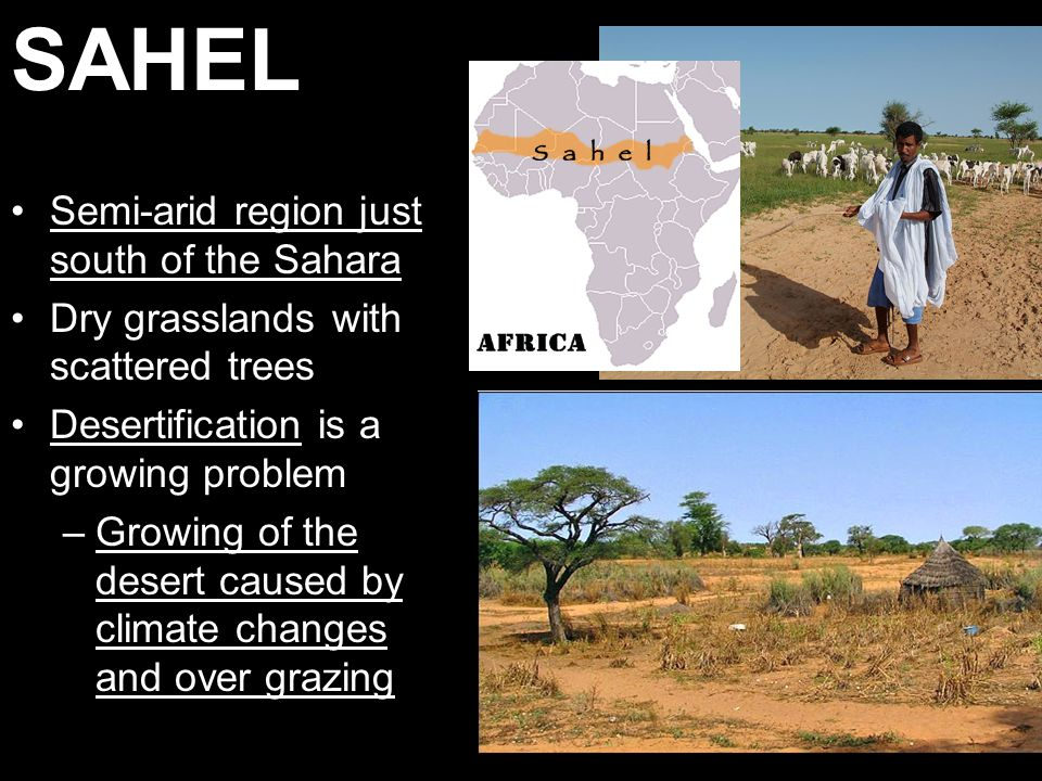 SAHEL Semi-arid region just south of the Sahara Dry grasslands with scattered trees Desertification is a growing problem –Growing of the desert caused by climate changes and over grazing