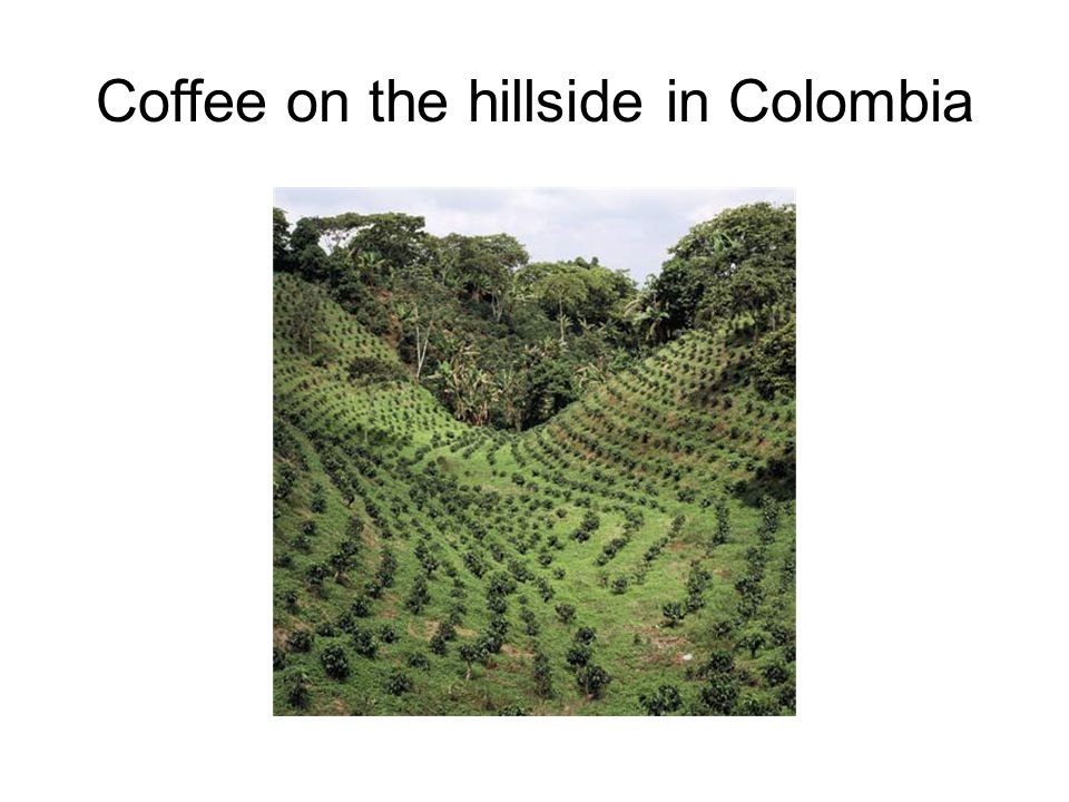 Coffee on the hillside in Colombia