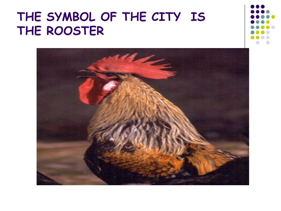 THE SYMBOL OF THE CITY IS THE ROOSTER