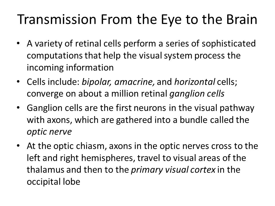 Transmission From the Eye to the Brain A variety of retinal cells perform a series of sophisticated computations that help the visual system process the incoming information Cells include: bipolar, amacrine, and horizontal cells; converge on about a million retinal ganglion cells Ganglion cells are the first neurons in the visual pathway with axons, which are gathered into a bundle called the optic nerve At the optic chiasm, axons in the optic nerves cross to the left and right hemispheres, travel to visual areas of the thalamus and then to the primary visual cortex in the occipital lobe