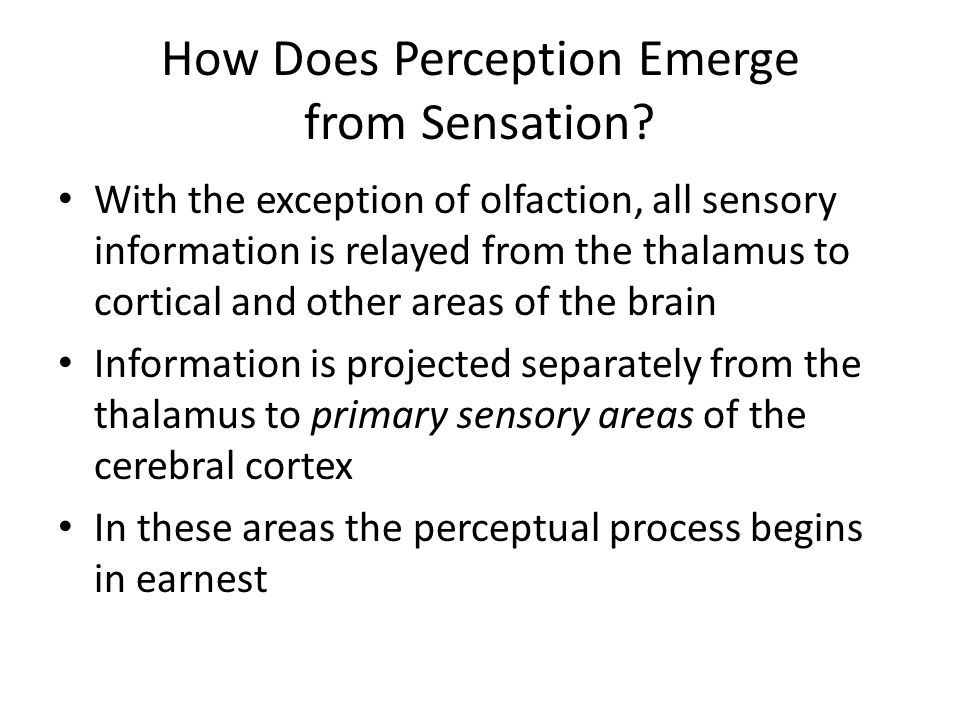 How Does Perception Emerge from Sensation? With the exception of olfaction, all sensory information is relayed from the thalamus to cortical and other
