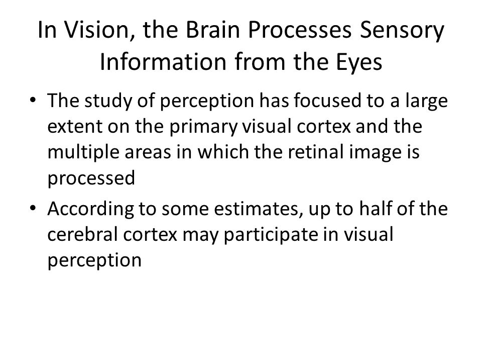 In Vision, the Brain Processes Sensory Information from the Eyes The study of perception has focused to a large extent on the primary visual cortex and the multiple areas in which the retinal image is processed According to some estimates, up to half of the cerebral cortex may participate in visual perception