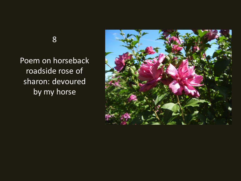 8 Poem on horseback roadside rose of sharon: devoured by my horse