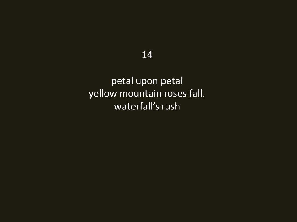 14 petal upon petal yellow mountain roses fall. waterfall's rush