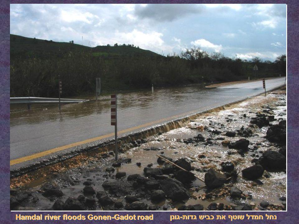 נחל חמדל שוטף את כביש גדות-גונן Hamdal river floods Gonen-Gadot road