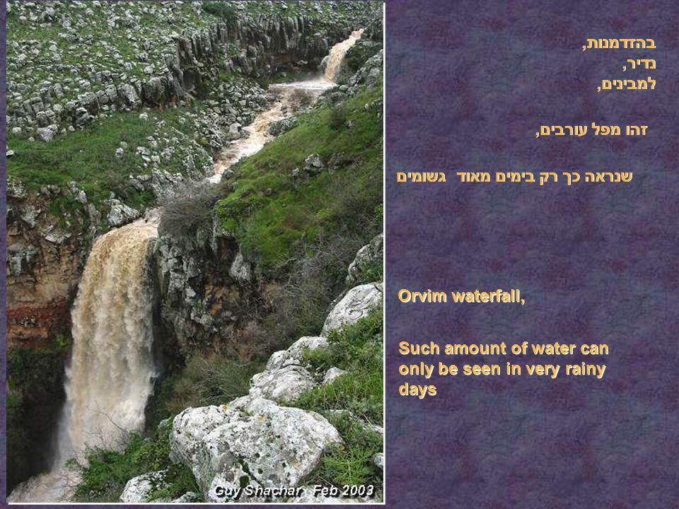 בהזדמנות, נדיר, למבינים, זהו מפל עורבים, שנראה כך רק בימים מאוד גשומים Orvim waterfall, Such amount of water can only be seen in very rainy days