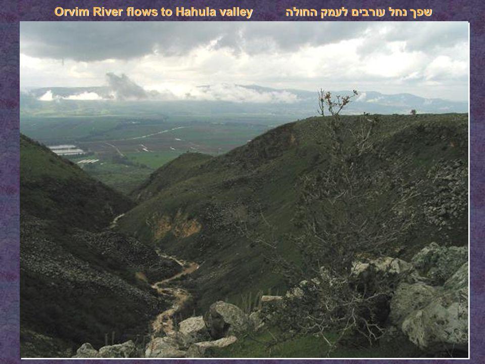 שפך נחל עורבים לעמק החולה Orvim River flows to Hahula valley